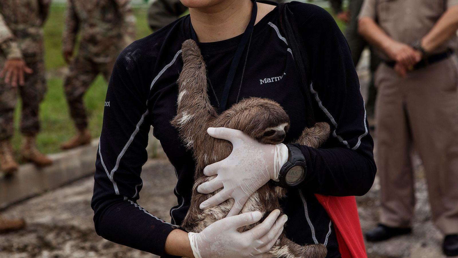 Veterinarian Violeta Barrera Navarro cradles a sloth after the rescue operation in Puerto Alegría.