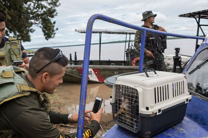 An air force officer snaps a photo of a rescued squirrel monkey. Puerto Alegría residents make ...