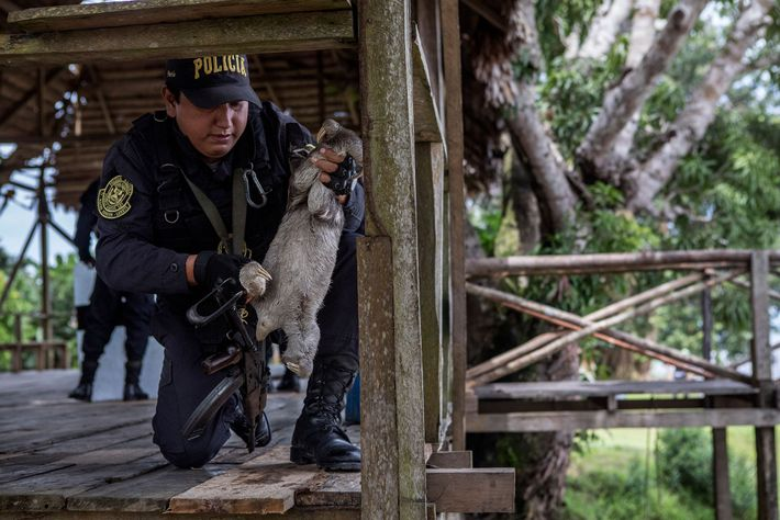 A police officer removes a sloth from a wooden railing. This large platform is the main ...