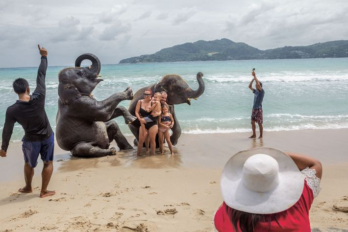 A British family enjoys a photo shoot with juvenile elephants at Lucky Beach on the island ...