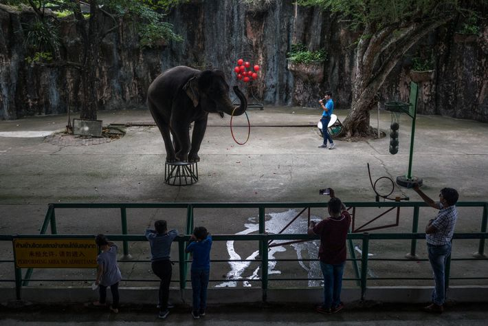 A young elephant performs for an audience at Sriracha Tiger Zoo, in Chon Buri, Thailand. Elephants, ...