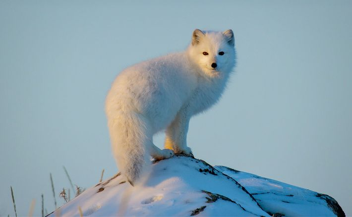 Wild_Life: The Big Freeze, filmmaker Bertie Gregory travels to the Canadian Arctic and braves freezing temperatures ...