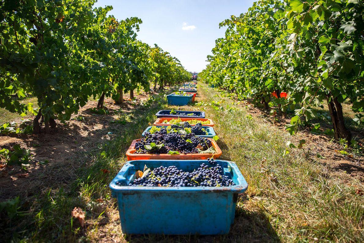 Raise a glass: Hungarian wine