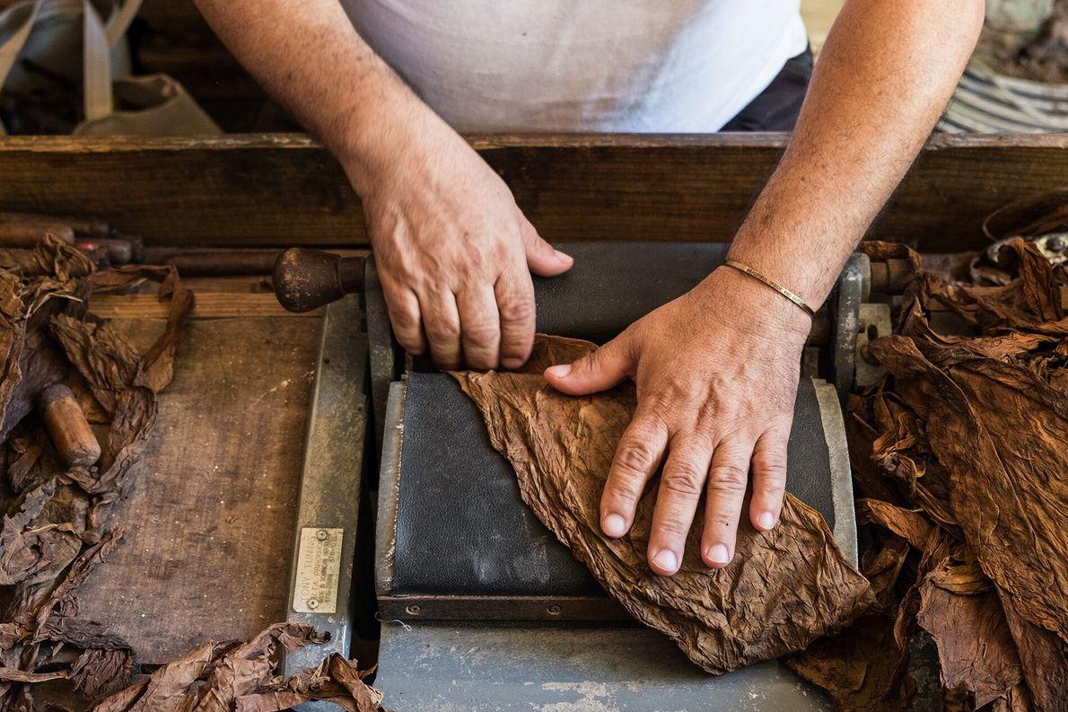 At his restaurant and cigar factory in Cabrera, Babunuco Cigars y Restaurant, Juan Alberto Martínez shreds ...