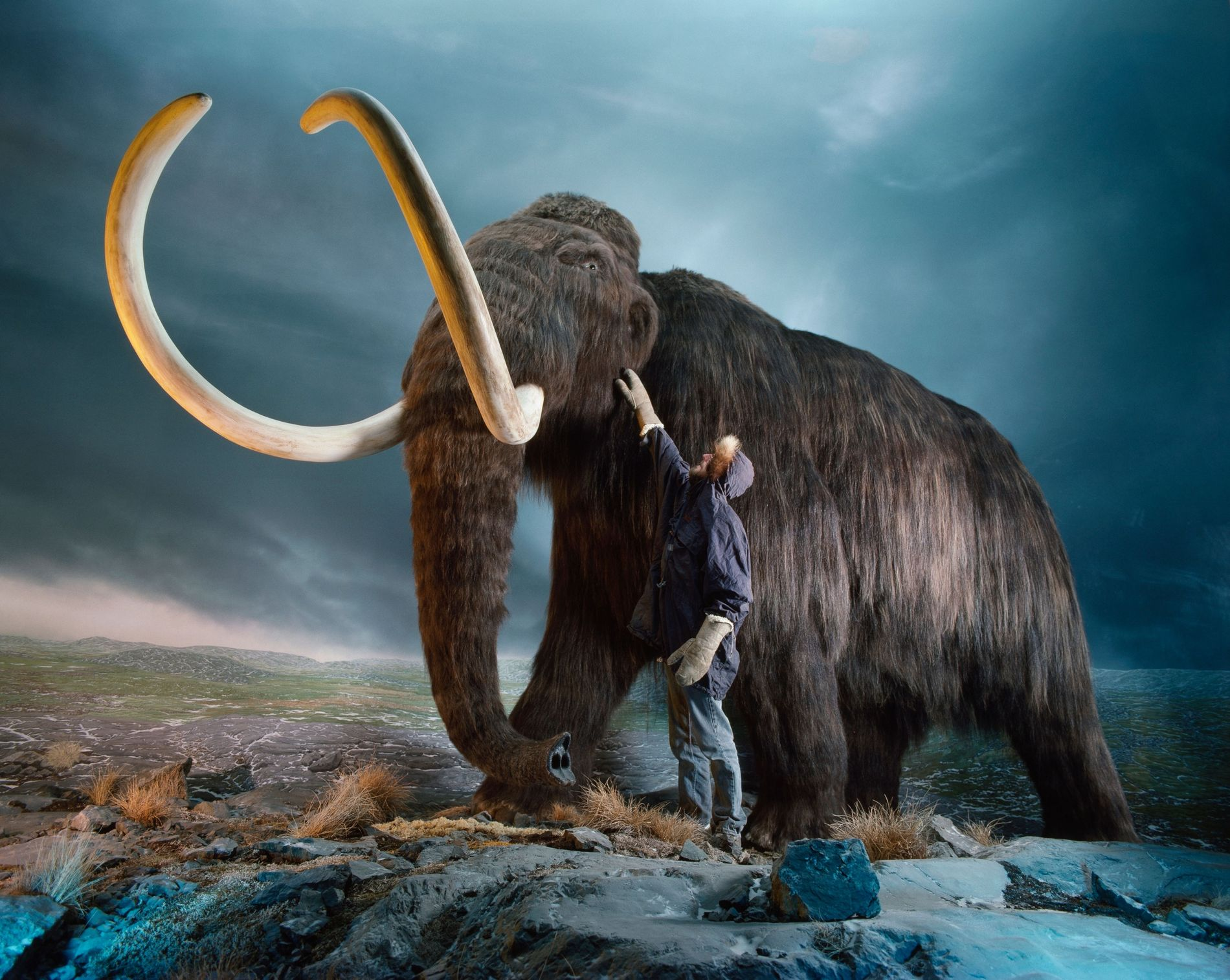 """Woolly mammoths, long-buried in permafrost—until now—are valued for their """"ice ivory."""" When carved, their tusks are ..."""