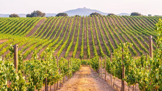 Herdade das Servas vineyard.