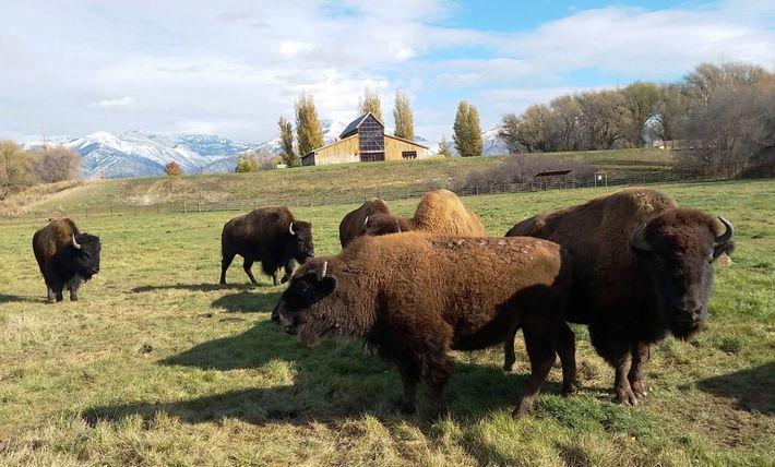 The American West Heritage Center,in the Cache Valley, tells the history of the American West between ...