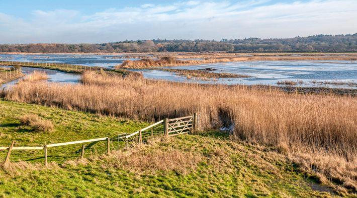 Ice on the flooded freshwater marshes of Ken Hill Estate, Snettisham, Norfolk.