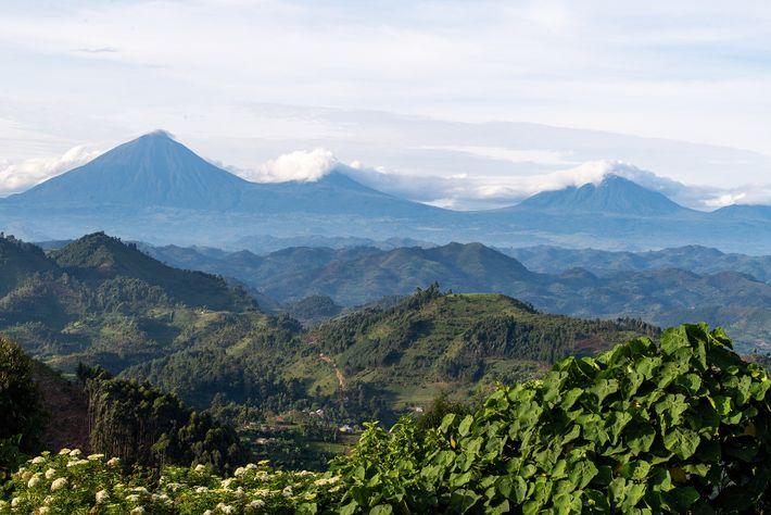 The peaks of the volcanic Virunga Massif, seen from Nkuringo Bwindi Gorilla Lodge.