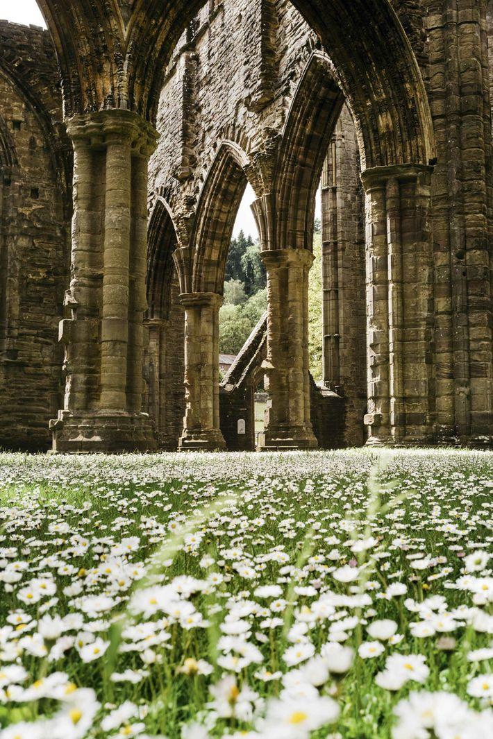 Tintern Abbey, which was founded in 1131.
