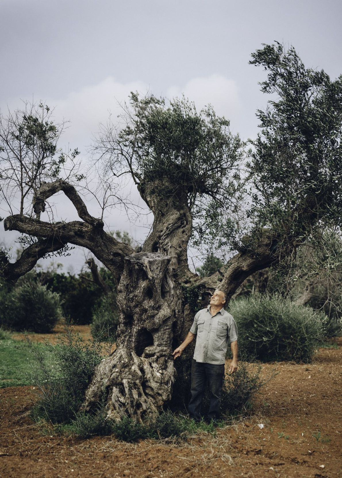 Cosimino de Luca was one of the first people to notice brown, withering leaves on his ...