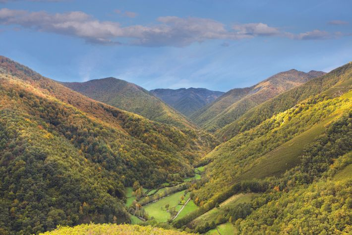 The protected hills and valleys of the Muniellos Biosphere Reserve encompass one of Europe's largest remaining ...