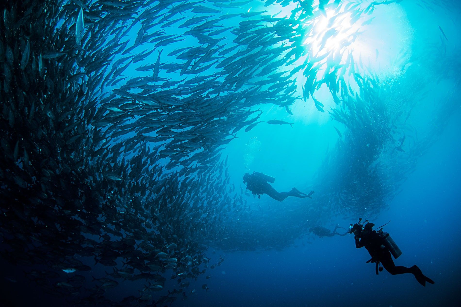 A diver swims beneath a shoal of fish