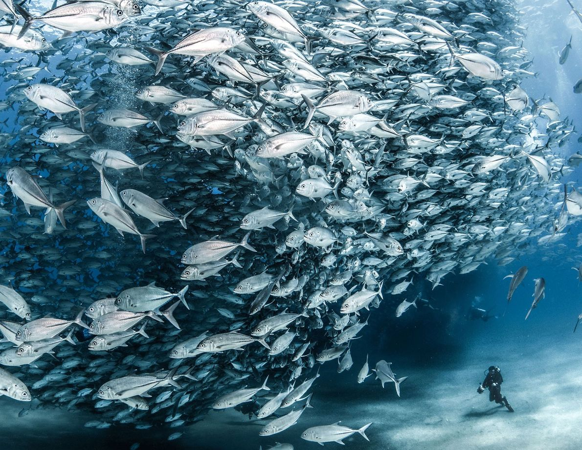 Jason Sintek credits the conservation efforts of a nearby village for the fact that divers can ...