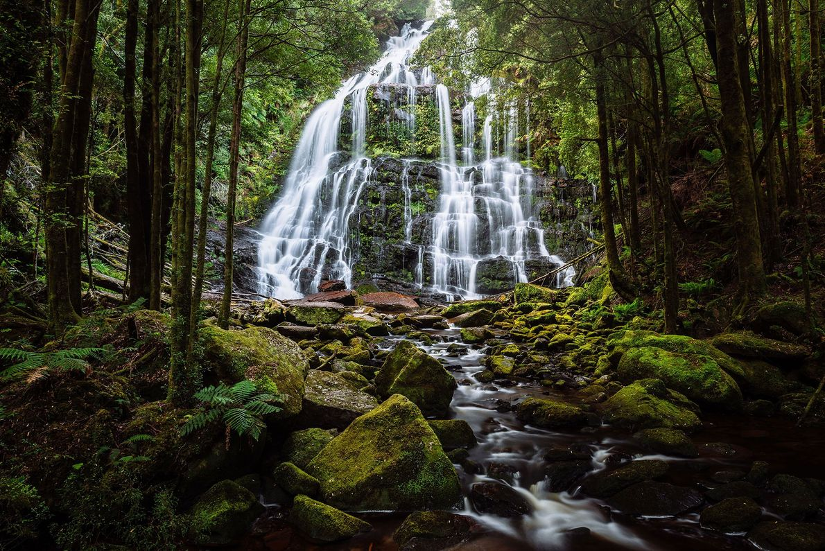 Trees diffuse the light of the setting sun across this tiered waterfall on Tasmania's west coast.