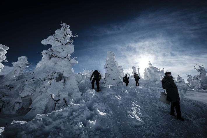 Juhyo are conifer trees covered in snow, taking on fantastical shapes and populating the slopes around ...